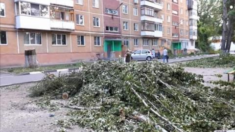 «Скоро будем дышать пылью и жариться на солнце»: в Саратове продолжают борьбу с деревьями