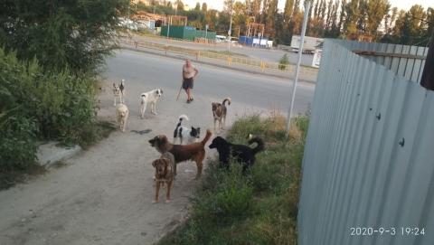 Бродячие собаки раздражают горожан у Комсомольского рынка | ВИДЕО