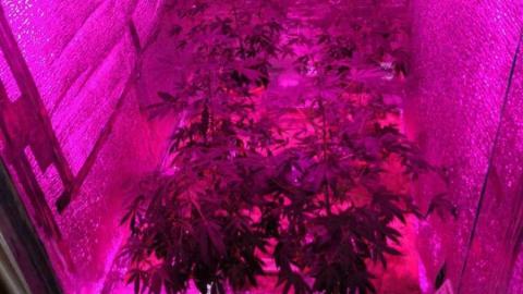 Гараж саратовца оказался мини-фермой по выращиванию марихуаны