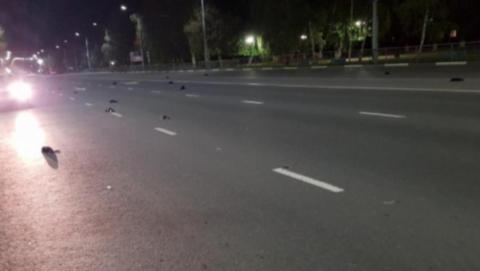 Причина массовой гибели птиц в Балакове осталась невыясненной