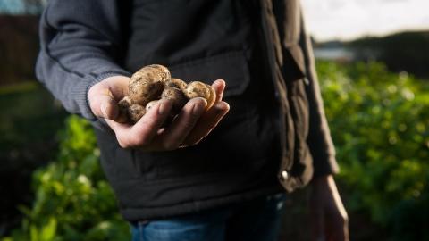 В Саратовской области внезапно подорожал картофель