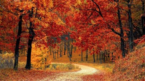 Октябрь начнется небольшим похолоданием