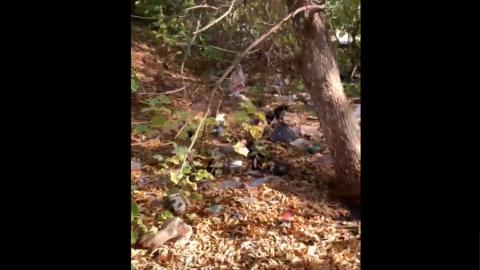 Горожанин заснял свалку в Солнечном | Видео