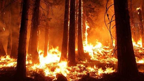 Саратовцам до конца октября нельзя посещать леса