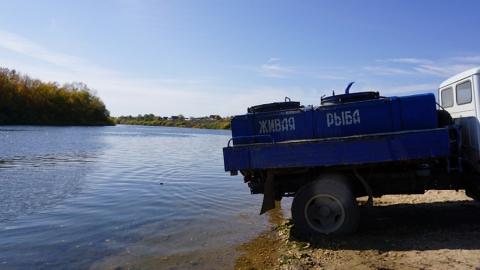 ООО «КВС» выпустило в Волгоградское водохранилище 786 тысяч особей молоди сазана