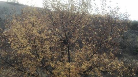В Саратовской области теплее обычного