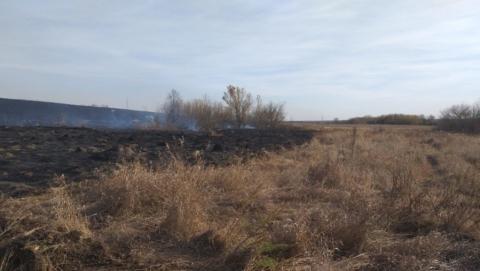 В Аркадакском районе потушили лесной пожар
