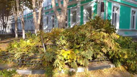 В центре Саратова спилили каштановую рощу