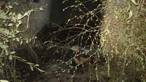 Обгоревшее тело мужчины найдено в заброшенном гараже в Энгельсе | 18+