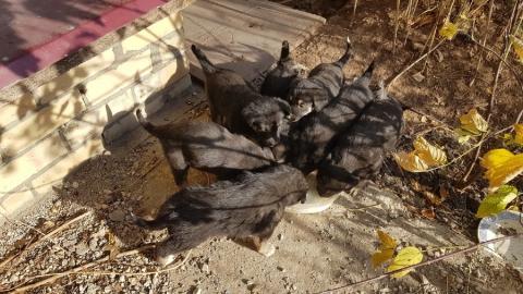 Балаковцам предлагают взять маленьких охранников и спасти щенков от усыпления