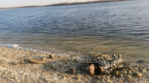 Рыбак наткнулся на тело собрата