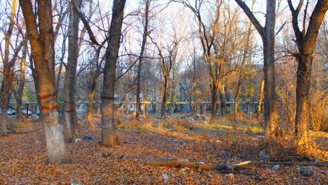 Житель Заводского района попросил обустроить парки