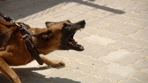 Натравивший на полицейских собаку саратовец проведет два года в колонии