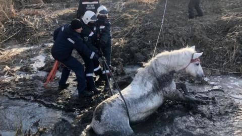 Саратовские спасатели вытащили обессиленную лошадь из реки Гуселки