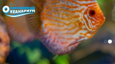 Саратовцев приглашают на самый подводный Новый год, или Где посетить фееричное шоу во время зимних каникул