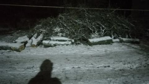 Спиленные деревья оставили жителей Заводского без парковки