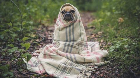 Саратовским бездомным собакам ухудшат условия содержания