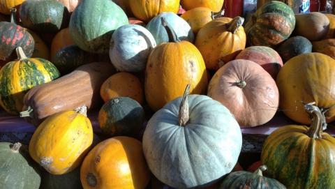 В субботу в Саратове пройдут сельскохозяйственные ярмарки