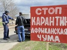 В Самойловском районе от чумы пал боров