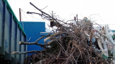 Регоператор: вывоз растительных отходов приблизил поступления на саратовские МПС к рекорду