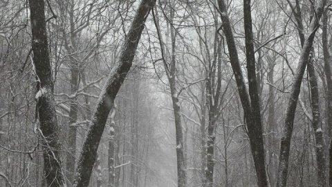 Погода в Саратове: туман с утра и снегопад вечером