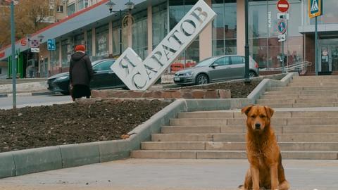 В Саратове возбуждено уголовное дело из-за жалоб на бездомных собак