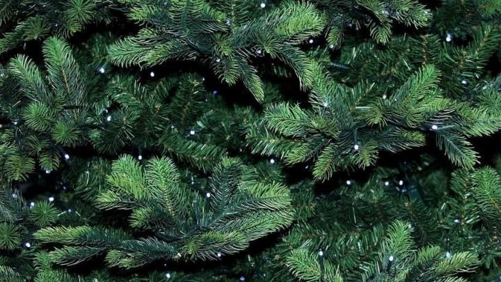Саратовцам рассказали, как выбрать искусственную елку