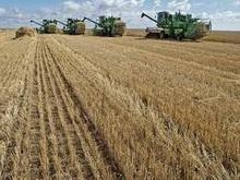 Стартовал обмолот озимой пшеницы