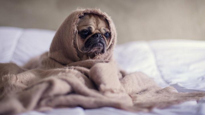 Житель Энгельса покупал собаку, но в итоге остался без денег и без собаки