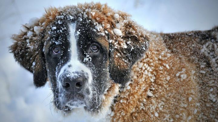 Снегопад вновь обрушится на Саратов