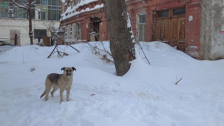 Михаил Исаев потребовал немедленно возобновить отлов бродячих собак