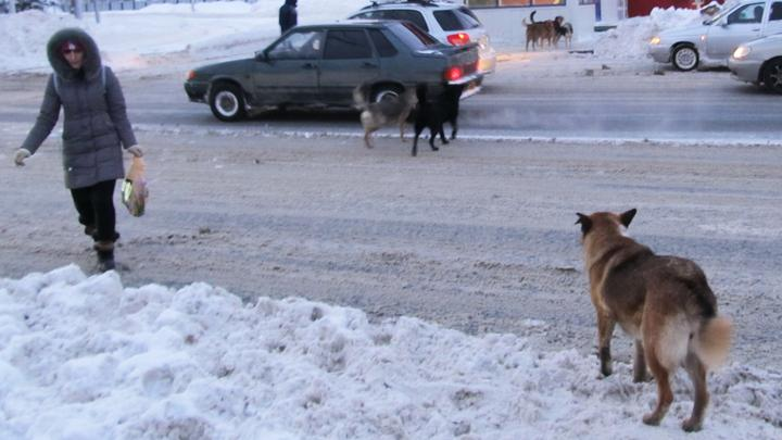 Саратову не хватит денег на отлов бродячих собак