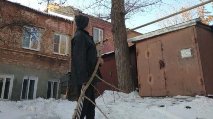 Пенсионеры второй год просят администрацию Саратова спилить аварийные деревья