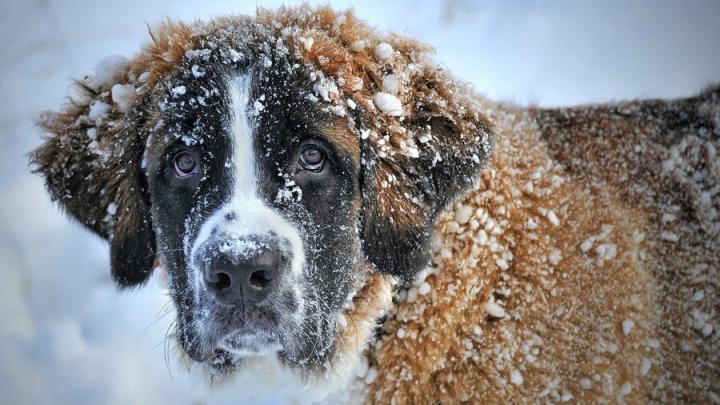 Снег с дождем будут в Саратове