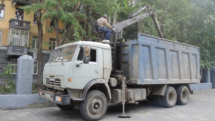 В Ленинском районе опилят 70 деревьев и посадят 50 катальп