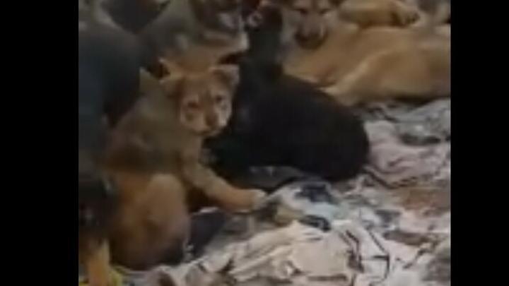 «Выброшенные» в Анисовке 14 щенков растопили сердца саратовцев | ВИДЕО