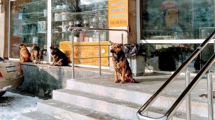 В Новобурасском районе за госсчет поймают восемь бродячих собак