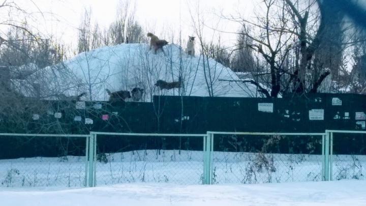 В Озинском районе будут ловить бродячих собак