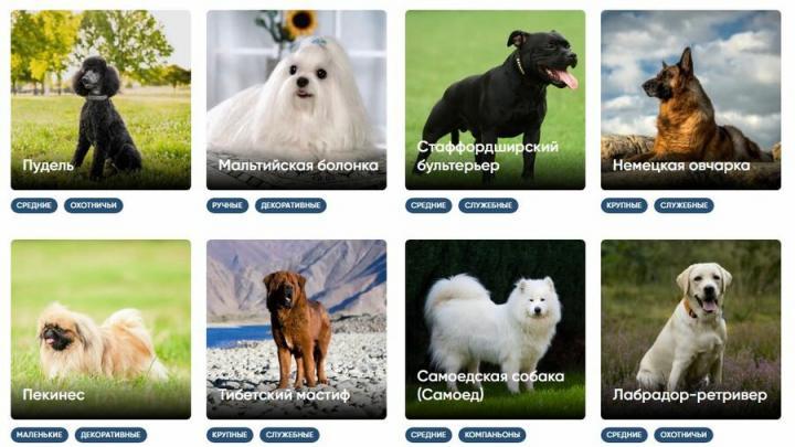 Как выбрать себе породу собаки с фото и названиями?