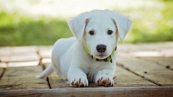 За пропавшую собаку мошенник попросил 10 тысяч рублей и пропал с деньгами