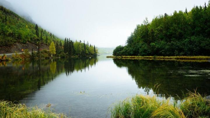 В водоемы Саратовской области выпущено рекордное количество мальков