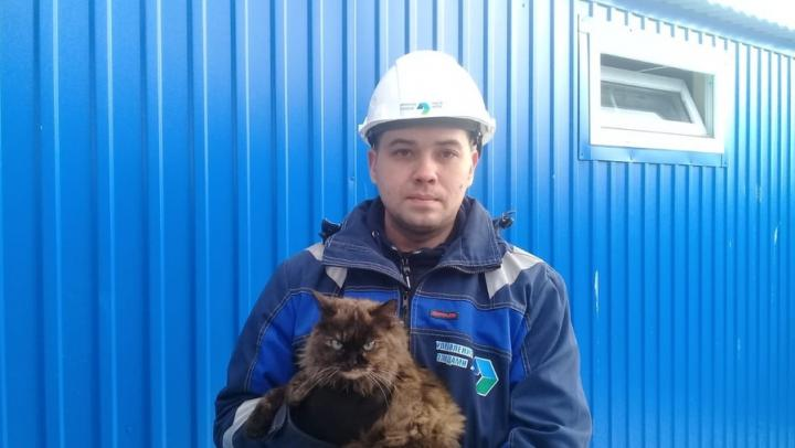 Сотрудники Энгельсского мусоросортировочного комплекса спасли кошку
