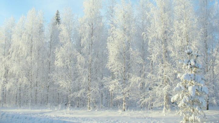 Северный ветер и холод вернуться в Саратове