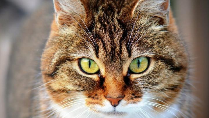 В Саратове кошка съела на 8 марта суровую нитку и попала в клинику