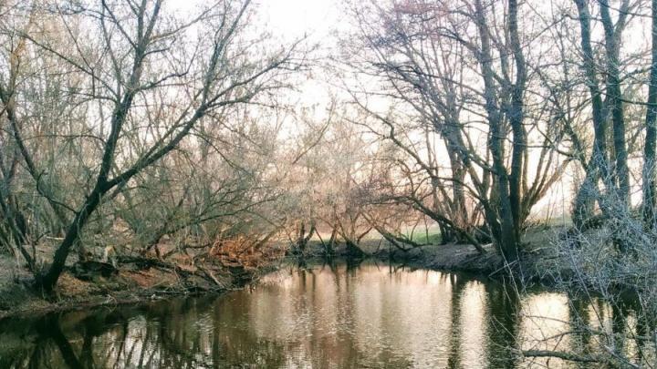 Саратовская область на втором месте по восстановлению лесов в ПФО