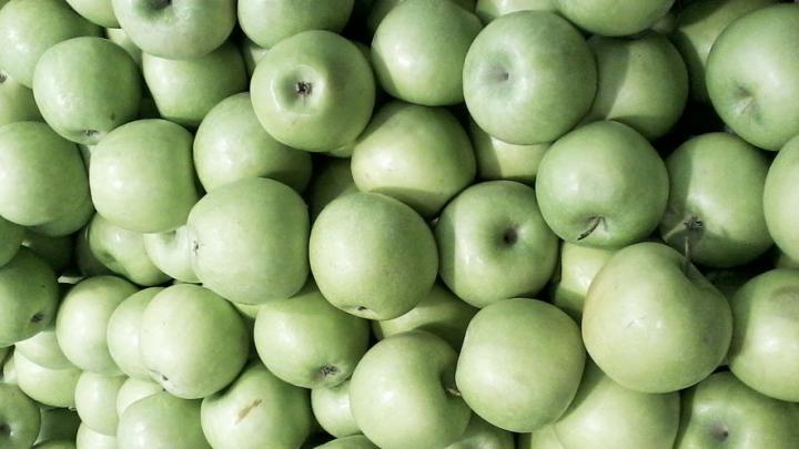 Саратовские чиновники рассказали, где можно купить яблоки по 50 рублей