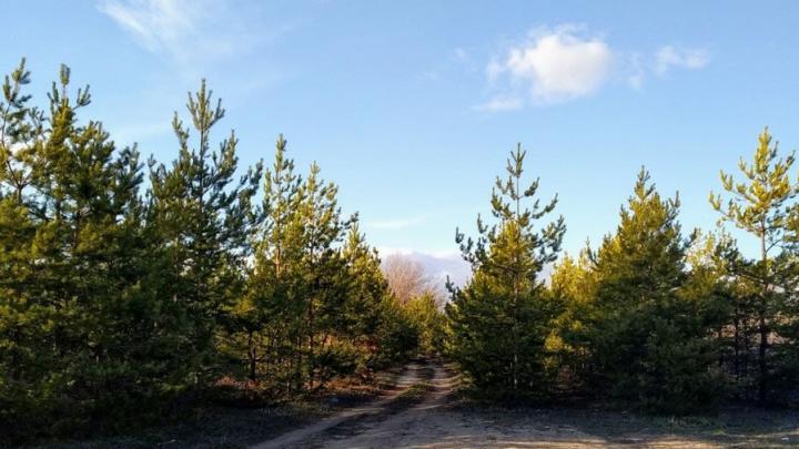 Суд обязал саратовского арендатора разработать проект освоения лесов