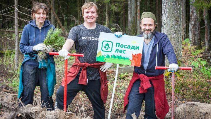 Саратовцев наградят денежной премией за восстановление лесов