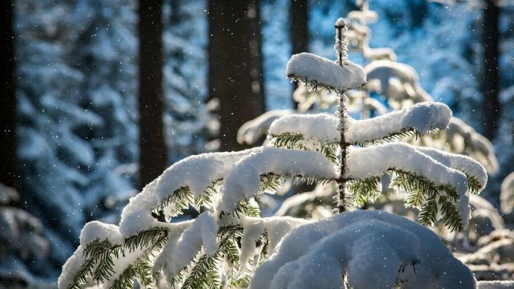 Снегопады вернутся в Саратов надолго