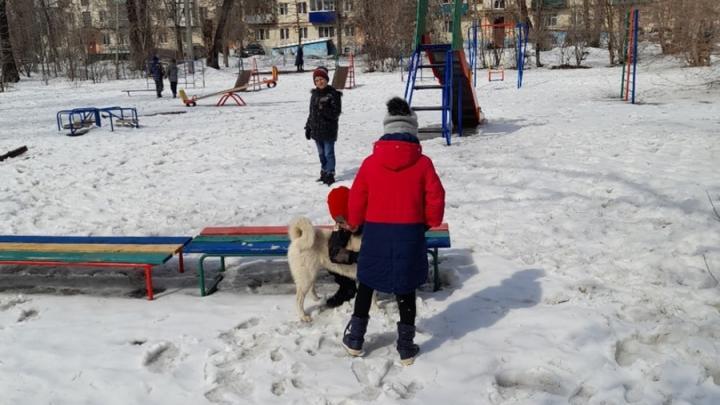 Житель Балакова пожаловался на нападение собаки-«мужененавистницы»